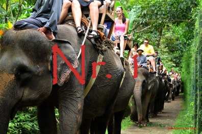 1.elephant-ride-bali-tour
