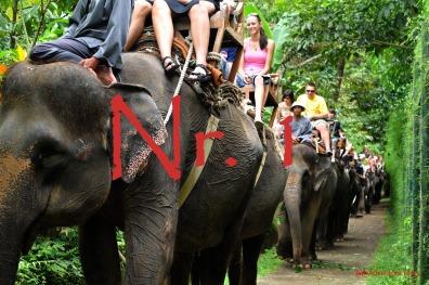 1.elephant-ride-bali-tour